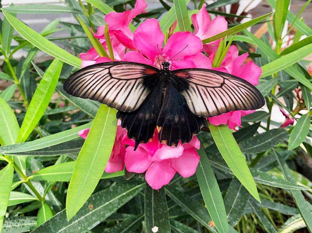 Butterflies Live